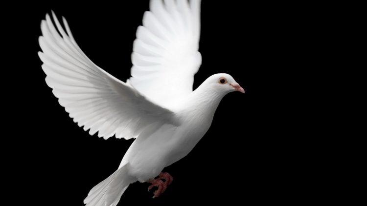 Puštanje golubice